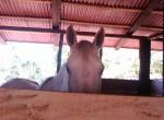 Casa_puriscal_cheval_224
